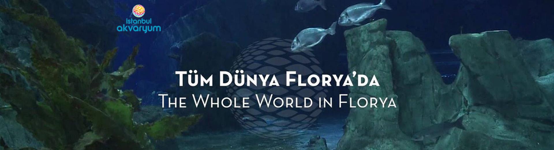 Florya İstanbul Akvaryum