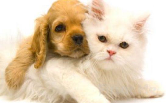 Sevimli Dostlarınız Kedi ve Köpeklerinizin Tüylerini Evinizde Kendiniz Kesebilirsiniz! Shed Ender Pro Kedi Köpek Tüyü Kesme Fırçası!