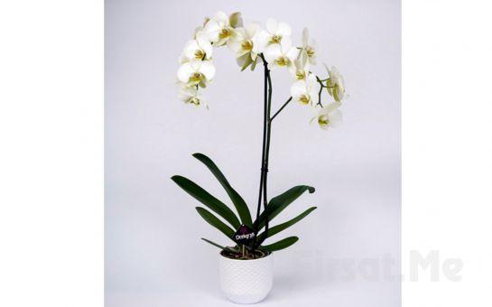 Çiçekgrafi'de Özel Gün ve Kutlamalarınız için Tek dal Beyaz Orkide