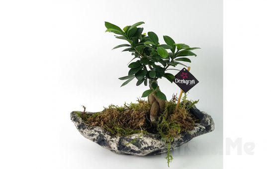 Çiçekgrafi'de Özel Gün ve Kutlamalarınız için Bonsai