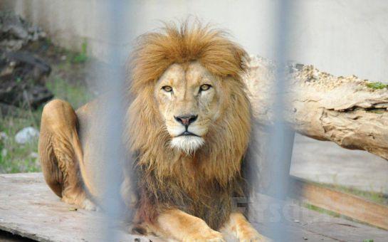 Darıca Emsa Palace Hotel'de 2 Kişi 1 Gece Konaklama, Açık Büfe Kahvaltı, Öğlen veya Akşam Yemeği, Hayvanat Bahçesine Giriş Fırsatı