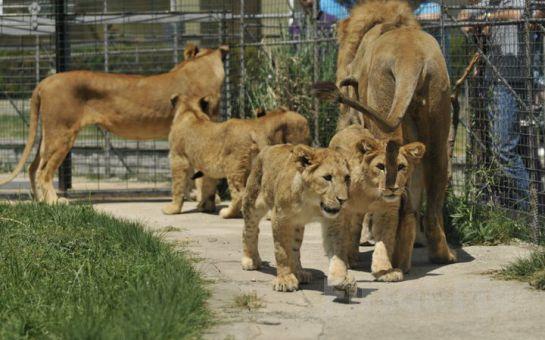 Darıca Emsa Palace Hotel'de Leziz Izgara Menü, Darıca Faruk Yalçın Hayvanat Bahçesine Giriş Fırsatı
