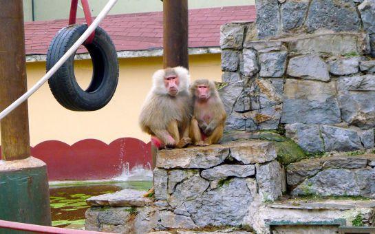 Tur Dünyası'ndan Her Hafta Sonu Günübirlik Darıca Hayvanat Bahçesi + Harikalar Sahili + Maşukiye + Sapanca Doğa Turu!