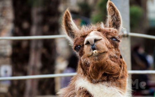 Darıca Salman Steak House'da Kahvaltı Tabağı ve Darıca Faruk Yalçın Hayvanat Bahçesine Giriş Fırsatı