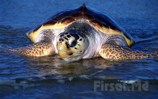 Öğle Yemeği Dahil Marmaris Dalyan ve İztuzu Kaplumbağa Plajı Günübirlik Tekne Turu!