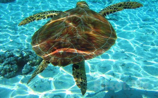 Öğle Yemeği Dahil Marmaris Dalyan ve İztuzu Kaplumbağa Plajı Günübirlik Tekne Turu