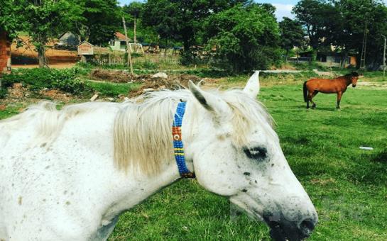Polonezköy Mimoza Park'ta Yemyeşil Doğa İçerisinde El Açması Gözleme Menü