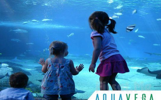 Su Altı Dünyasında Büyülü Yolculuk için Ankara Aqua Vega Akvaryum'a Giriş Bileti
