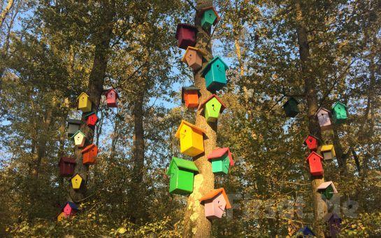 Tur Dünyası'ndan Günübirlik Kartepe, Maşukiye, Ormanya Kar ve Doğa Turu