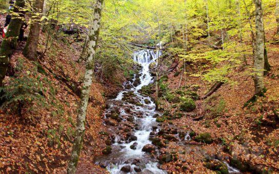 Sonbaharın Eşsiz Renkleri ve Havası İle Buluşun Paytur'dan 1 Gece 2 Gün Yarım Pansiyon Konaklamalı Abant, Gölcük, Sünnet Göl ve Göynük Turu