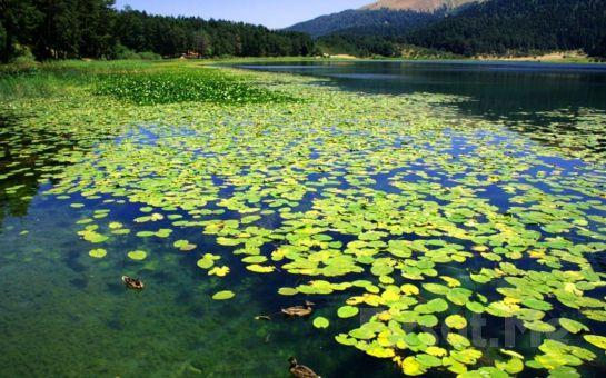 Tournetur'dan Hereke'de Serpme Kahvaltı Dahil Maşukiye, Ormanya, Sapanca Ters Ev Doğa Terapi ve Göl Turu