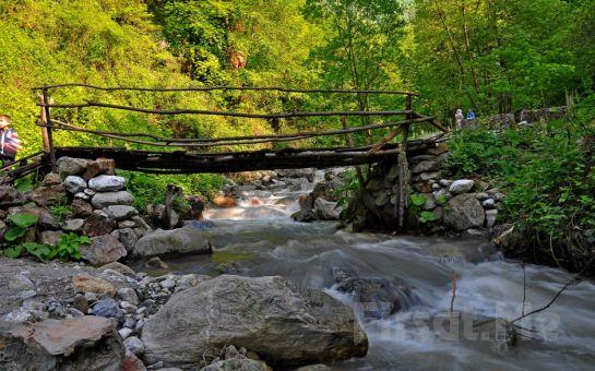 Volare Tour'dan Günübirlik Öğle Dahil ve Cam Seyir Teras Dahil Maşukiye, At Çiftliği, Sapanca, Ormanya Doğa Turu