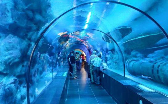 Viaport Marina Tuzla'da Aslan Park veya Viasea Akvaryum Bileti