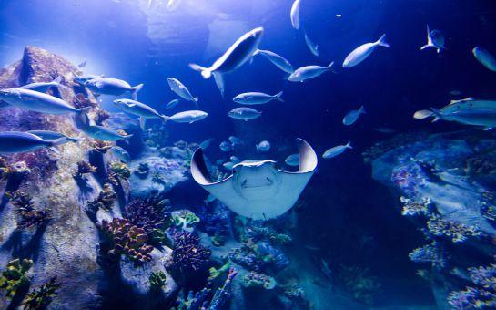 İzmir'in İlk ve Tek Akvaryumu, Westpark 'Funtastic Aquariums İzmir' Giriş Bileti
