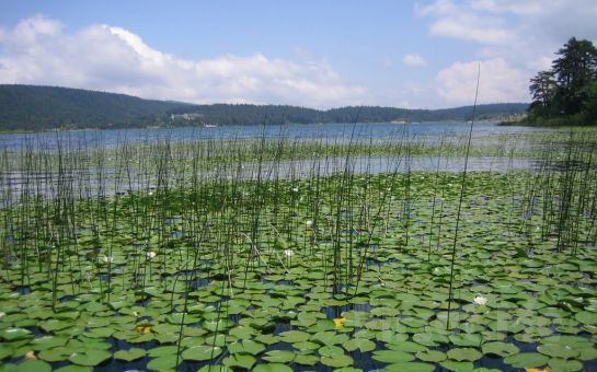 Tatil Bugün'den, Öğlen Yemeği İkramıyla Günübirlik Sapanca ve Abant Doğa Turu (Her Cumartesi ve Pazar)
