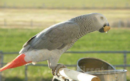 Mogan Gölü Teorossi'nin Çiftliği'nde Kahvaltı Keyfi ve At İle Gezinti Seçenekleri!