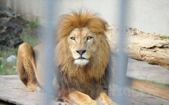 Leggo Tur'dan, 19 Mayıs'a Özel Harikalar Sahilinde Açık Büfe Kahvaltı, Günübirlik Faruk Yalçın Hayvanat Bahçesi Turu