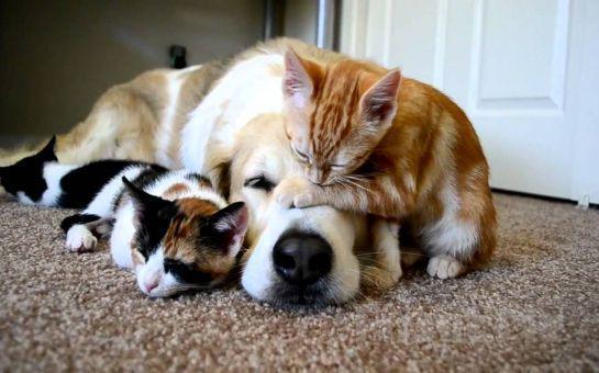 İstediğiniz Boylarda Kedi Ve Köpeğinizi Traş Edebilmenizi Sağlayan Traş Makinesi! (Ücretsiz Kargo)