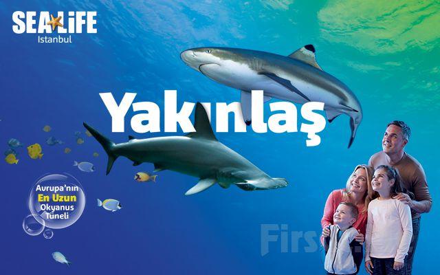 SEA LIFE İstanbul Akvaryum Hafta İçi Giriş Bileti