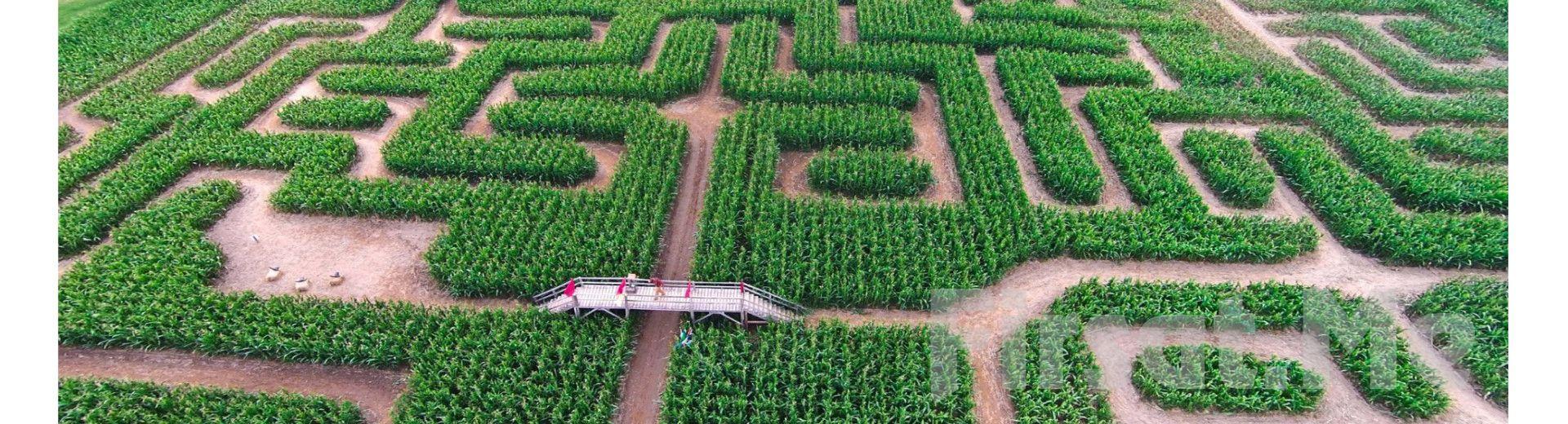 Doğanın Ortasında Corn Maze İstanbul'da Mısır Labirenti ve Korku Labirenti Giriş Bileti