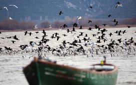 Tur Dünyası'ndan Günübirlik Öğle Yemeği Dahil Gölyazı Köyü, Ulubatlı Gölü, Mudanya ve Trilye Doğa Turu