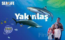 SEA LIFE Akvaryum Haftanın Her Günü Geçerli Giriş Bileti